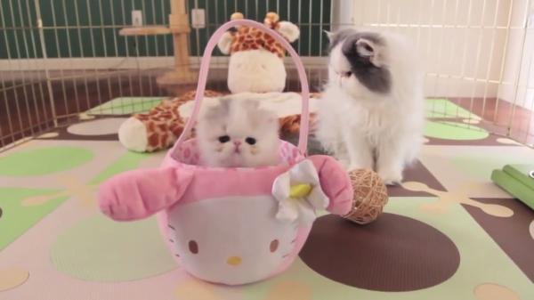 産まれて5週間!子猫はいろんなことに興味津々♪芸もできるようになりました