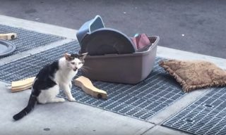 悲しすぎる!!猫用グッズと一緒に捨てられた猫。あまりにも身勝手な飼い主の捨てた理由に愕然!そんなことって…