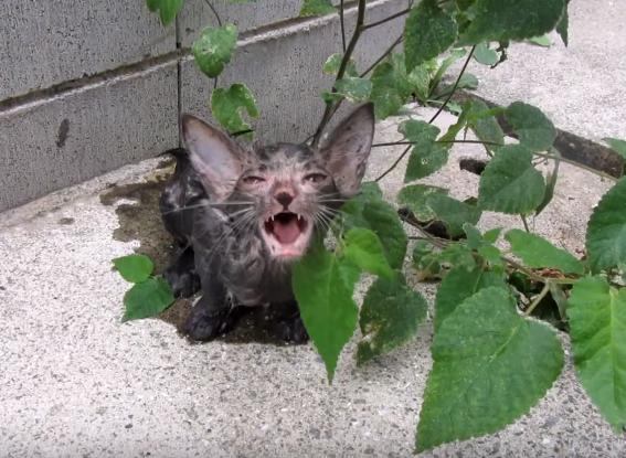 溝に落っこちて男性に助けられた子猫と、心配で心配で鳴き続けて迎えに来た兄弟の子猫