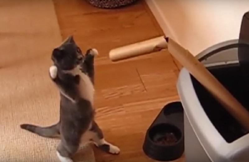 ロッキー顔負けのパンチ?!ひたすらゴミを猫パンチしてるネコはもはやプロボクサー!
