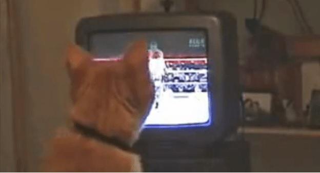 爆笑!TVでボクシングの中継を観ていたら興奮していきなり猫パンチの練習をはじめた猫さんww