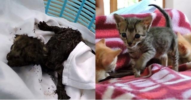 驚愕そして感動の結末!レストランの排気ダクトから声が?!解体し探してみるとナント油にまみれた瀕死の子猫たちが出てきた!