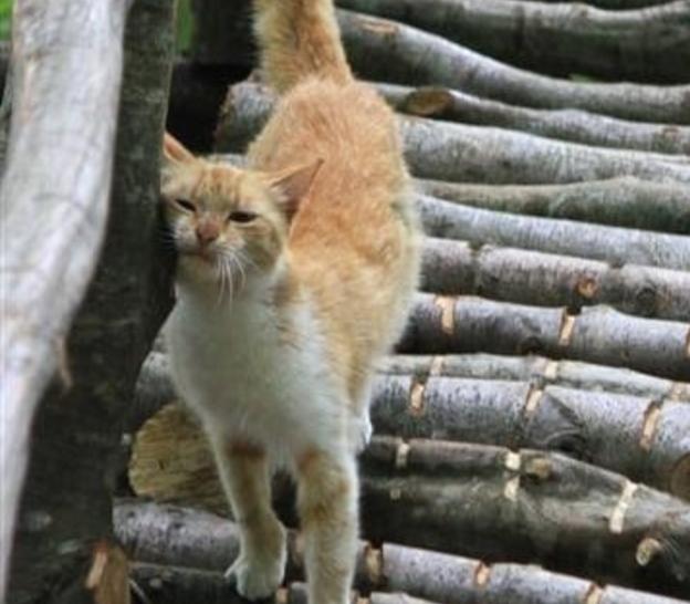 広大な森林地帯に自治体が建設した猫の楽園。訪れる人を800匹の猫が迎えるトルコのキャットタウン