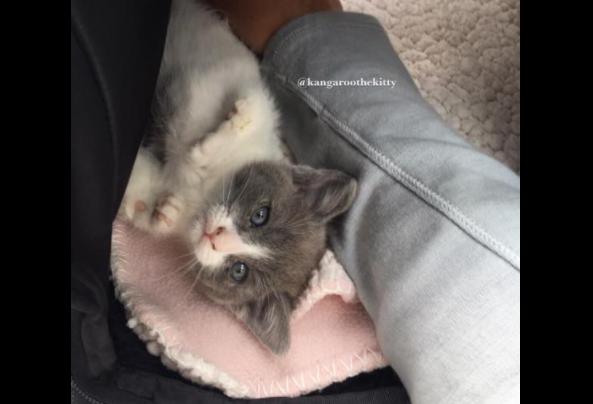 ゆっくりと成長する前肢に障害を抱え小さく生まれた子猫と子猫の成長を支えた彼女