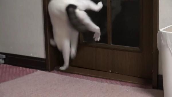ドアを開けるのはお手の物☆テンションの違いによってドアの開け方が変わる猫ちゃんww
