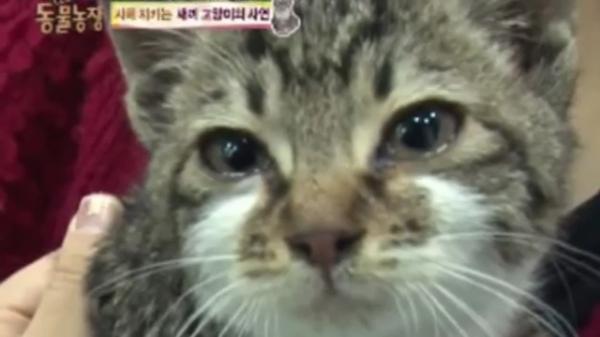 母猫との突然の別れを悲しむ子猫。飼い主さんの腕の中で涙を流しました…