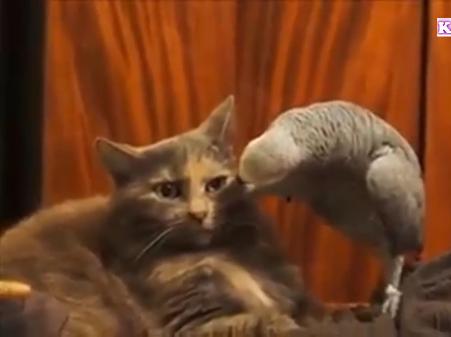 「は…はじめまして…」初めて会った自分とは違う動物達に困惑しまくる猫ちゃん達の反応が笑えるwww