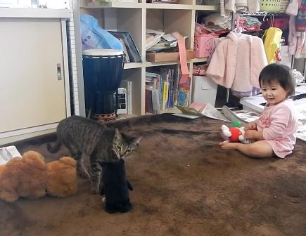 動くぬいぐるみに怯える娘ちゃんを猫ちゃんが助けた!のをいい事に猫ちゃんにけしかける娘ちゃんとのやりとりが笑えるww