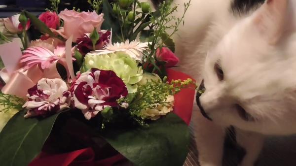 初めてお花を見た猫ちゃんの反応は!?「お花キレイにゃ〜」ではなく、やっぱり猫ちゃんでしたwww