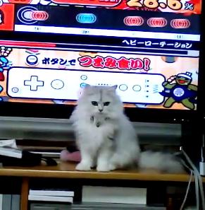 リズム感バッチリ!?テレビで太鼓の達人をプレイしていたら猫ちゃんも参戦してきたwww