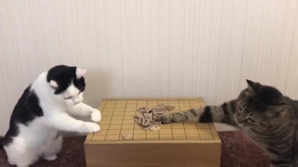おネコ様2匹に将棋をやらせてみた結果!?良い感じ♪と思いきや…ズシャッ!!とですよねーな結果にww
