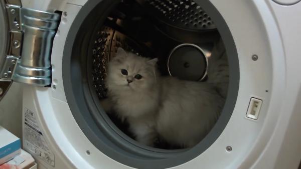 ドラム式洗濯機の中に入った猫ちゃんが閃いた!!洗濯機を完璧に回し車にしちゃった猫ちゃんww