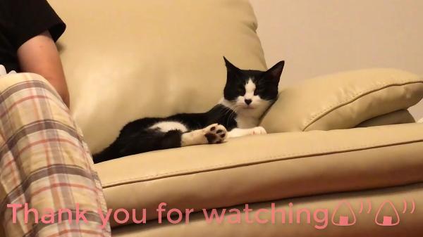 飼い主さんに慣れてきたトライアル中の保護猫さん!パパが名前を呼ぶとしっぽでお返事するのに、ママが呼ぶと…ww