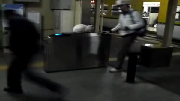 みんなの癒し♪駅の改札機の上で下車してくる人々をお出迎えする白猫さん♪