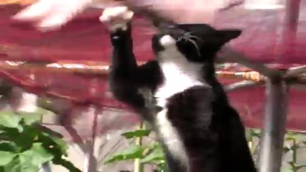 イカ干し機でグルグル回るイカとアジを狙う野良猫ちゃん!悪いことはしちゃいけないなぁとつくづく思わされる結果になりましたww