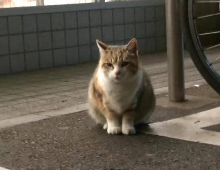 コンビニを出たらモッフリした可愛らしい野良猫ちゃんが雨宿り中でした♪