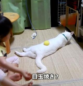 「ケンカしちゃダメ〜!」と2匹の猫ちゃんの間に入った娘ちゃんのケンカの止め方が斬新www