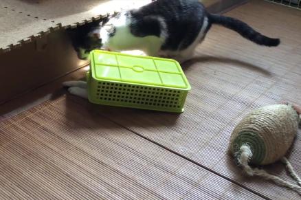 ひっくり返ったプラスチック容器に潜り込んで閉じ込められちゃった子猫!?