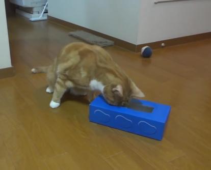ティッシュ箱にINされたおやつを取ろうと必死な猫ちゃん!結果はやっぱりそうなるよね〜www