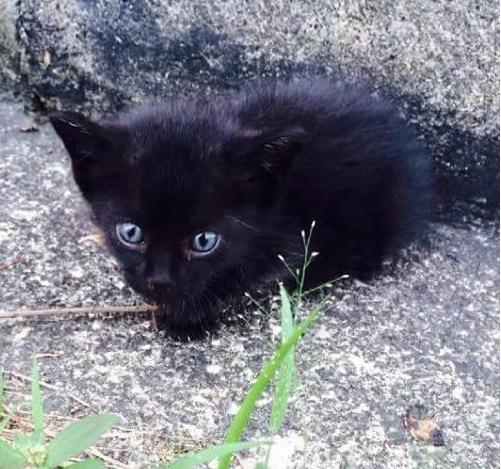 道端でひとりぼっちでうずくまっていた子猫にご飯をごちそうしたら、大きな声で鳴きまくった!