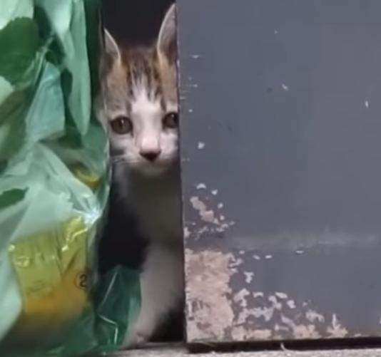ご飯にありつきたいのに兄弟に出遅れた子猫が焦るっ!『あぁ~んっ!僕の分まだあるよね?』