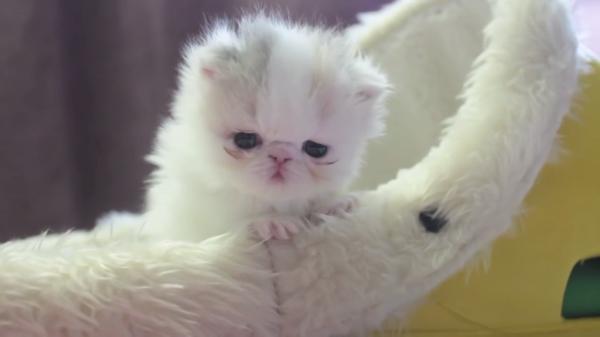 産まれて4週間!かわいい子猫の赤ちゃんの日常にちょっとだけお邪魔してみよう