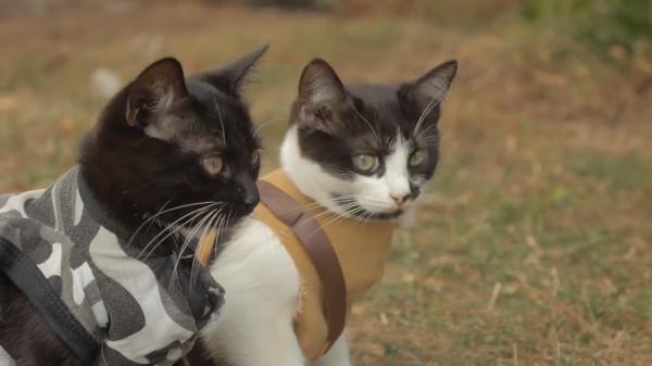 猫VSゾンビ 果たして子猫の運命は?
