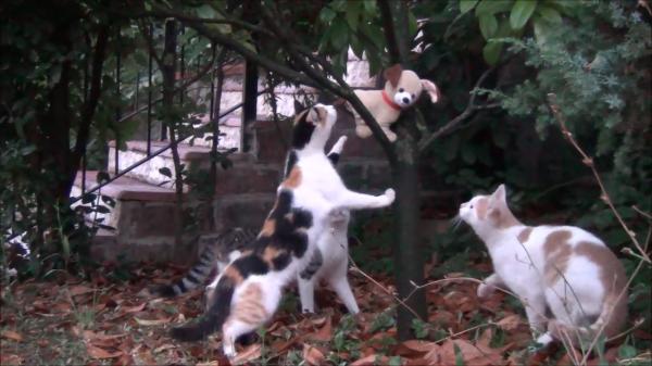 「子猫?」「助けなきゃ」「アレ犬じゃない?」スピーカー付きぬいぐるみに対する三匹の反応(笑)