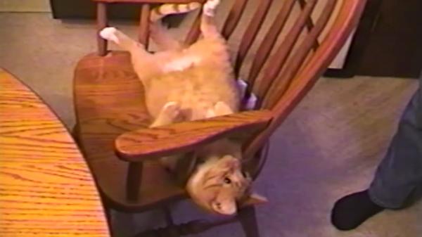 謎の一芸披露(笑)物凄い勢いで椅子に登る猫ちゃんがシュール可愛い♡