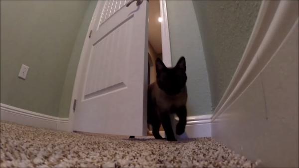 ドアの開け方を覚えた猫ちゃん…移動が自由自在♪