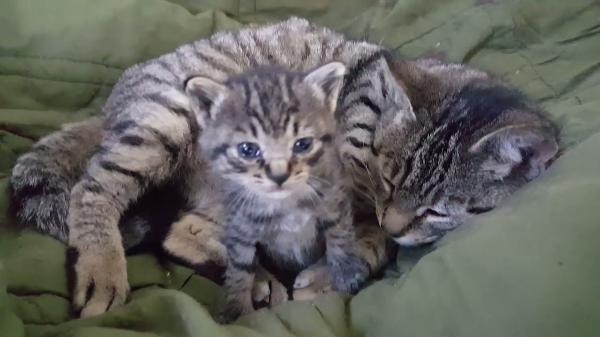 ほのぼの親子♪我が子を触ろうともきゅもきゅする母猫の手が可愛すぎる!!