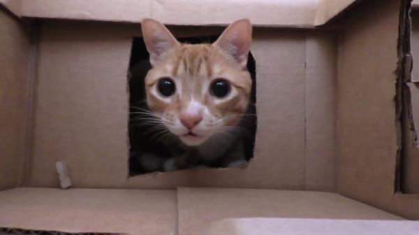 猫ちゃんたちのパラダイス♪ダンボールで作った猫ちゃんたちのための遊び場がすごい!!