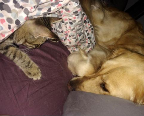 『君の親友にそっくりだね』次々に親友を亡くした私の犬が、知らない子猫を連れてきた。