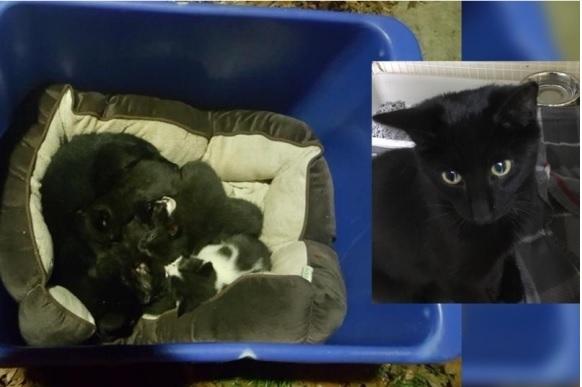 感涙!冷たい雨が降りしきる中で一生懸命子猫たちを温めていた猫…実は母猫ではなかった!!