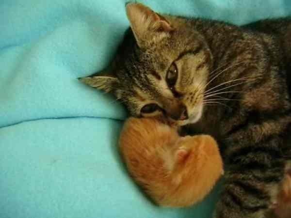 いつも世話してくれる女性に助けを求めてきた1匹の野良猫。「どうしたの?」ただならぬ様子を感じ家に連れ帰ったところ…素敵なサプライズが!!