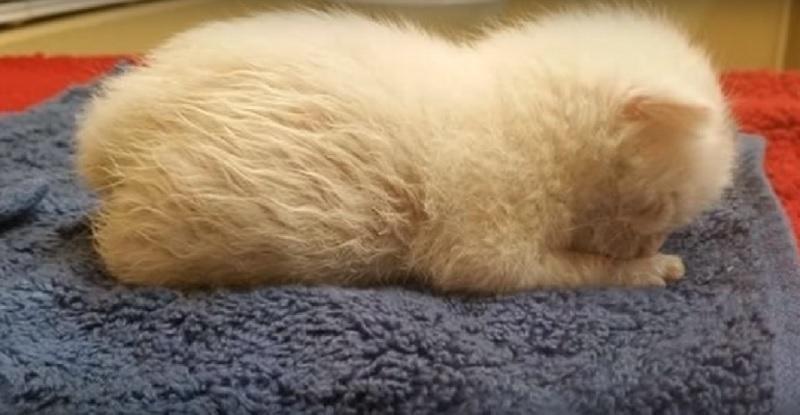 生まれてからわずか1日で捨てられた子猫。誰もが生きるのは難しいと思ったが、心優しい女性に救われ成長すると最高のパートナーに♡