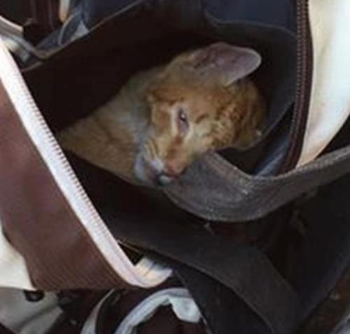 ゴミを捨てに行った彼女がゴミ箱の中にバッグパックを発見。ふたりがかりで開けてみたら瀕死の猫が出てきた・・・