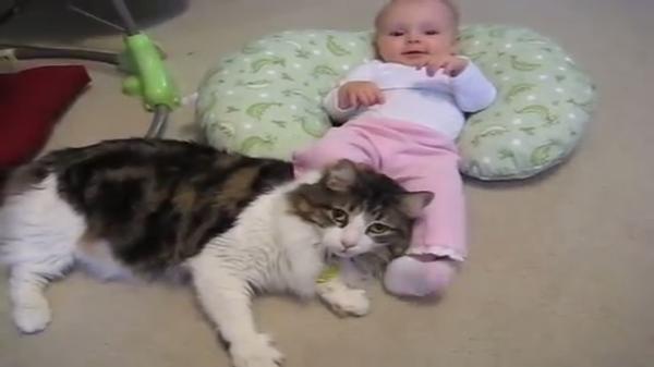 「あ~そこそこ♪」赤ちゃんから蹴りまくられているのになんだか楽しそうな猫(笑)