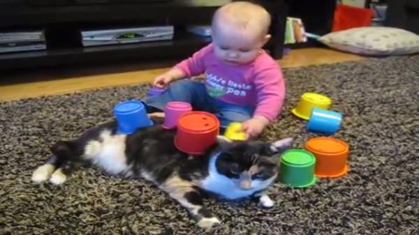 「猫ちゃんかわいくしてあげる」猫のお腹にカラフルなカップを乗せ始めた赤ちゃんw