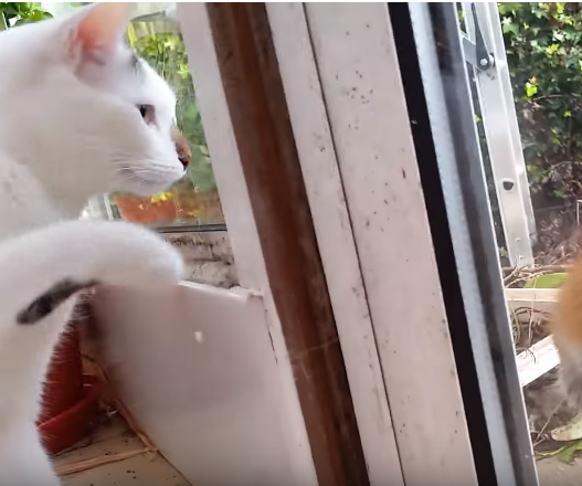 『珍しいお客さんが来てるね』2匹の猫たちがガラス越しにふれ合った野生の素敵な訪問者