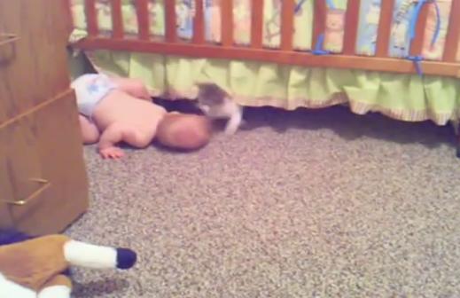赤ちゃんと子猫のかくれんぼ!どっちが鬼だかわけがわからなくなるw