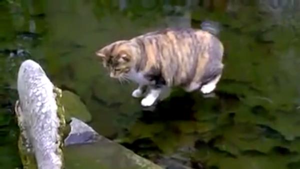 「下にお魚さんいるにゃ!」氷の下の魚を捕まえたい猫ちゃん♪