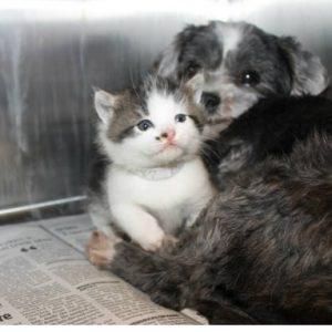 涙腺崩壊!見捨てられた子猫を守っていたワンコ。保護されてからもずっと一緒…異種族を越えた親子愛に感動♡