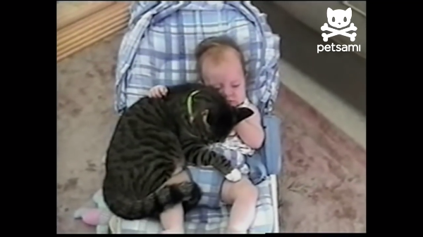 「狭くても一緒がいい!」赤ちゃんに甘える猫ちゃんがかわい過ぎる~!