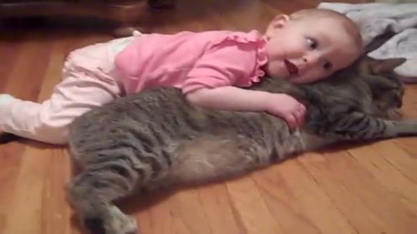 赤ちゃん「猫ちゃん枕だいすきー!!♡」猫「そろそろ離して…(泣)」