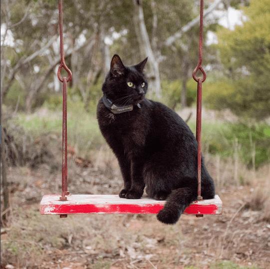 人生の岐路に立ったとき、いつもそばに寄り添ってくれた猫と旅に出ることを決意した彼