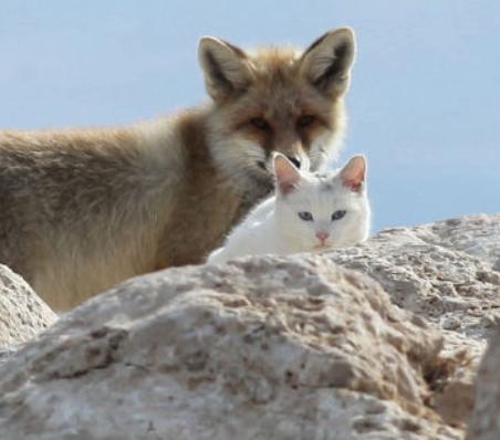 はじめての出会いから1年、地元の漁師さんたちが見守るキツネと猫が寄り添って生きる姿。