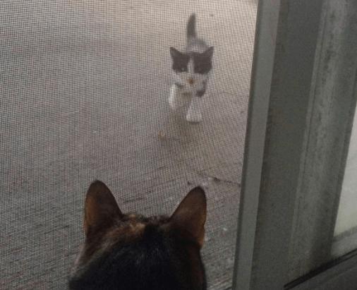 『お腹がすいたの!ごはーん!』突然現れたやせっぽちの子猫は愛猫が最も信頼する子分になった!
