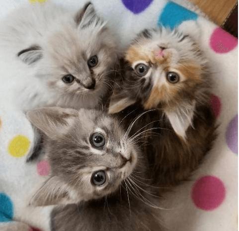 ひとりぼっちで保護された寂しがりやの小さな子猫と子猫を温かく迎えた姉妹の子猫たち