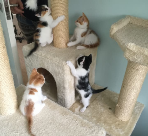 『ひとりでよく頑張っていたね。もう大丈夫よ。』誰の助けも借りずに子猫を守っていた野良猫のママ